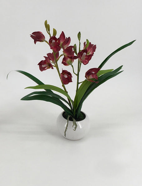 Assorted Orchids in Circular White Pots