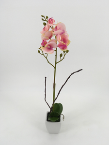 Single Tall Pink Orchid with White Pot