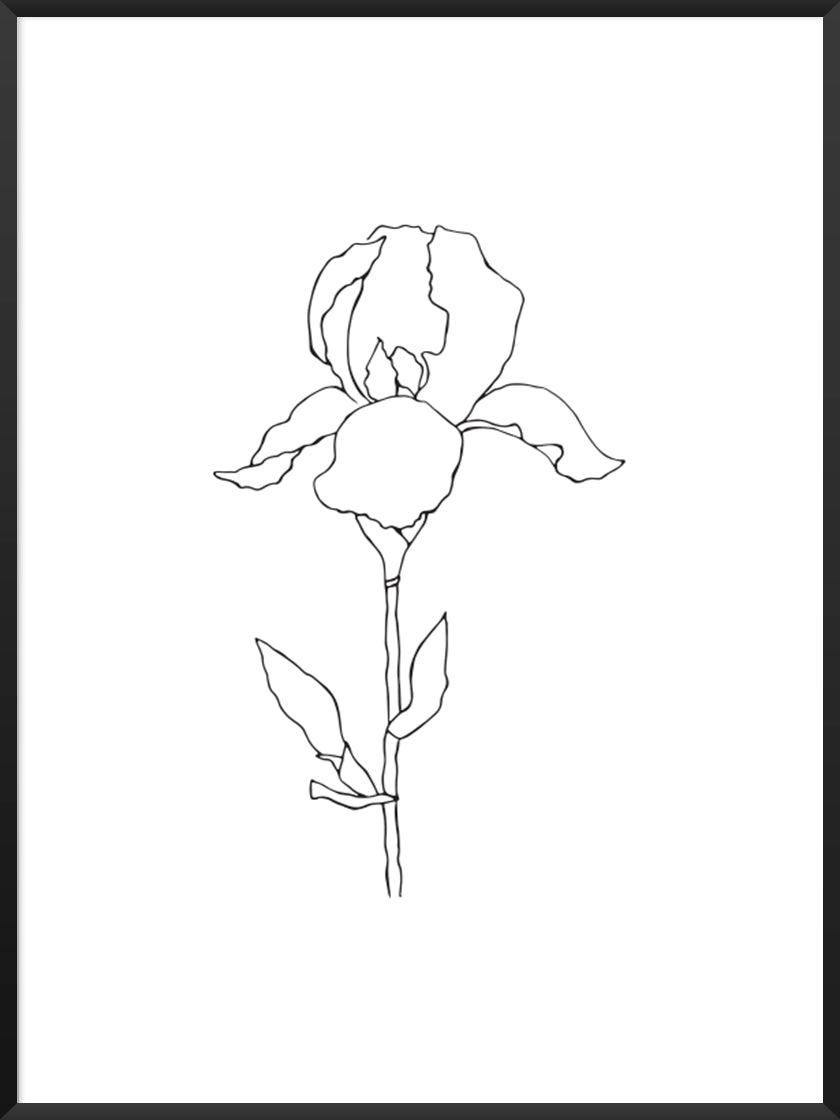 iris-minimalist-line-art-plant-poster-product-picture
