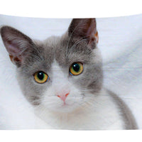 Beautiful Cat Wall Tapestry