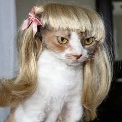 Funny Blond Cat Wig