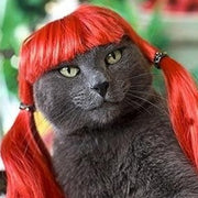 Funny Red Cat Wig