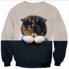 Peekaboo Persian Kitten Sweater
