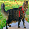 Cat Harness And Leash