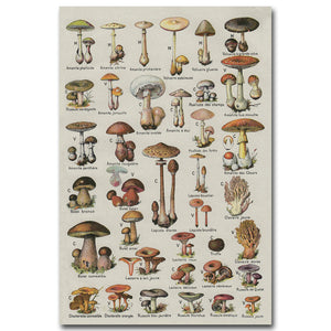 VINTAGE FRENCH MUSHROOM CHART poster - Kickcap