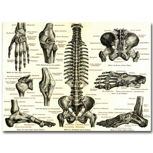 Human Anatomy Bone Skeletal Poster Medical Education - Kickcap