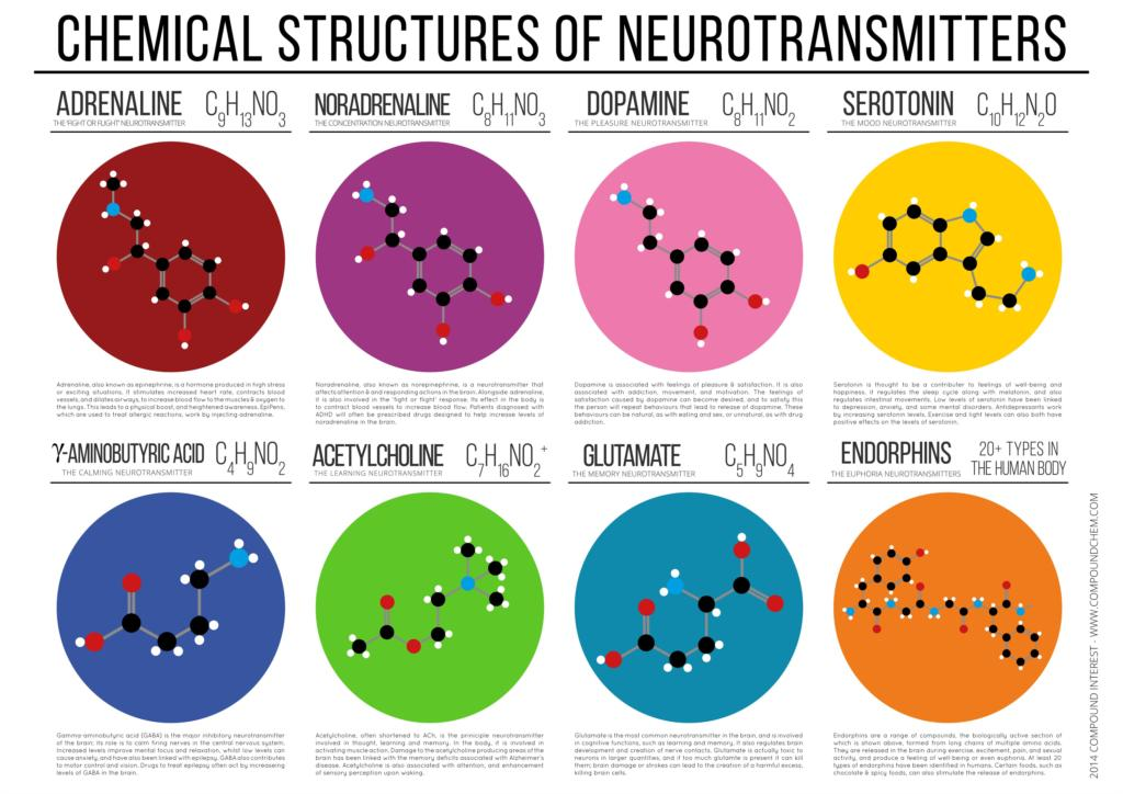 Chemical Structures of Neurotransmitters Education Poster - Kickcap