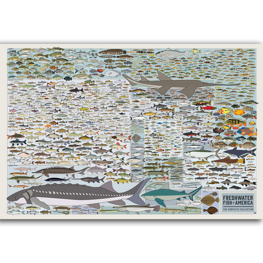 Fish Of America Educational Poster - Kickcap