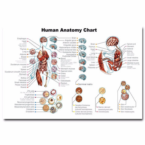 Human Anatomy Medical Science Poster - Kickcap