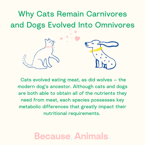 cats carnivores, dogs omnivores