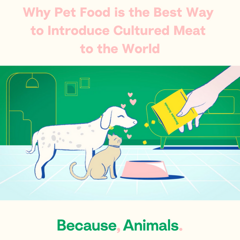 pet food is the best way to introduce lab grown meat to the world
