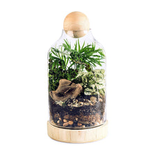 Load image into Gallery viewer, DIY Terrarium Kit