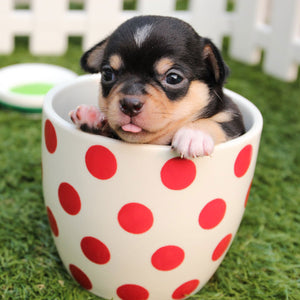 10 Tricks for Training Your New Puppy