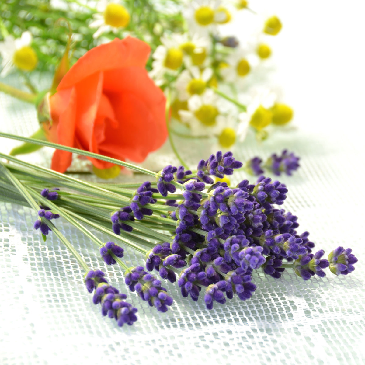 Lavender Chamomile and Rose photo