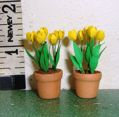 24TH YELLOW Tulips flower kit