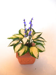 LARGE HOSTA in SQUARE planter  1:12 Dolls House Plant
