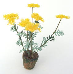 ACHILLEA [Yellow]FLOWER KIT 12th