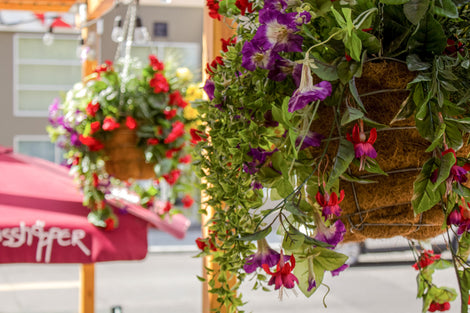 UV Hanging Baskets