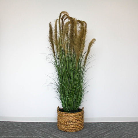 6ft Grass & Reeds in Basket Planter