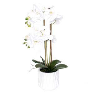 Real-Touch Phalaenopsis in White Pot