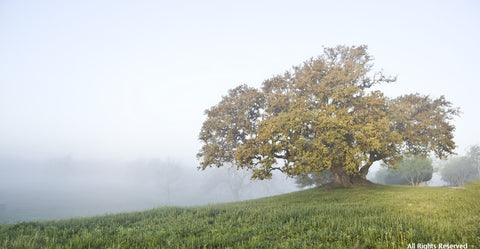Foggy Oak Note Card
