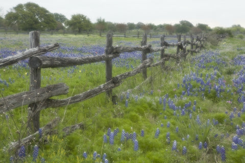Bluebonnet Fences