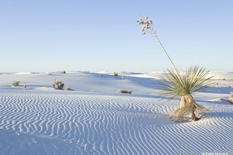 White Sands Variety Pack