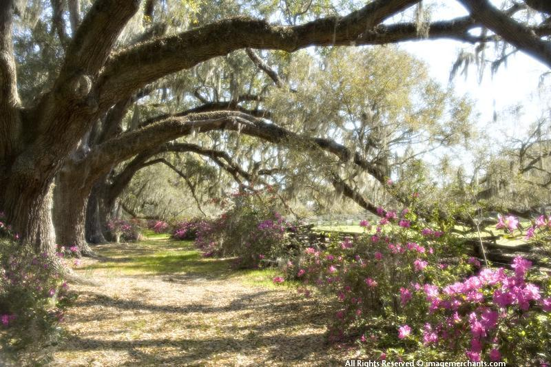 Charleston South Carolina, Magnolia Plantation, South in the spring