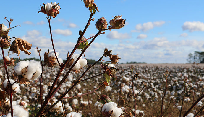 What is Egyptian Cotton?