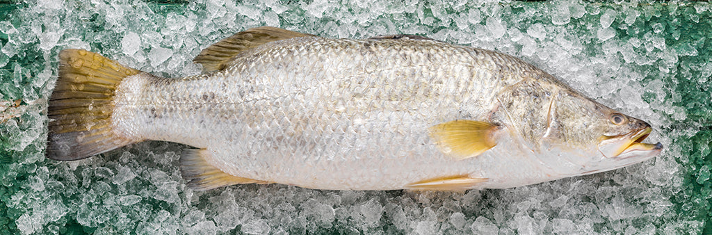 Barramundi fillets 300gm PACK