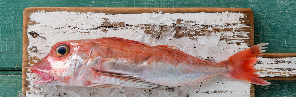 Gurnard fillets 300GM PACK