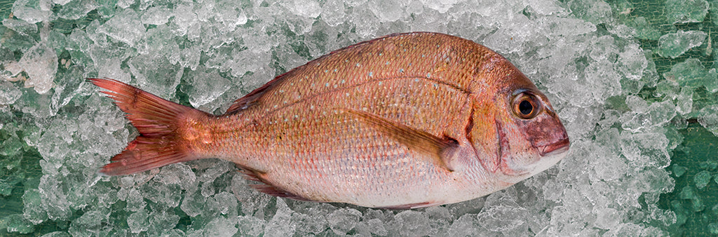 Snapper fillets 300gm PACK