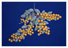 Beautiful Quality blank greeting card featuring the Golden Wattle - Australia's National Floral Emblem. From an original pastel painting by Alison Murphy.