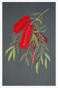 Card - Weeping Bottlebrush 148 x 105mm - white border 5mm. Each card & envelope encased in crystal clear cello pack.