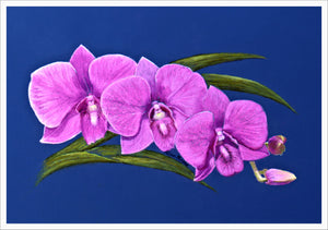 Card - Cooktown Orchid Trio 105 x 148mm - white border 5mm. Each card & envelope encased in crystal clear cello pack.