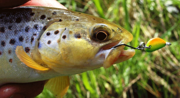 Strike Tiger micro spoon trout