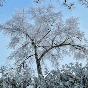 winter wonderland | rime ice | hoar frost | mother nature