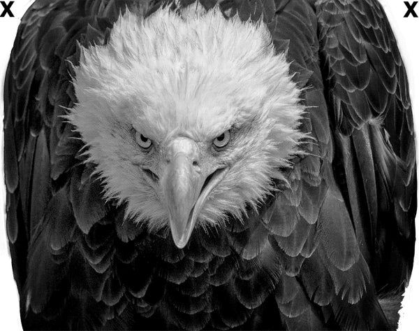 Angry north American bald eagle- High Detail HD Airbrush Stencil