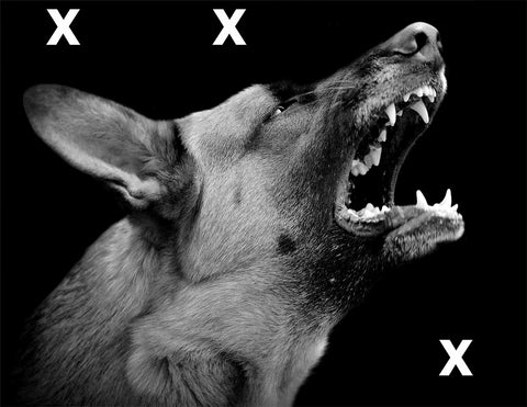 Angry dog on dark background -  HD Airbrush Stencil High Detail Airbrush stencils