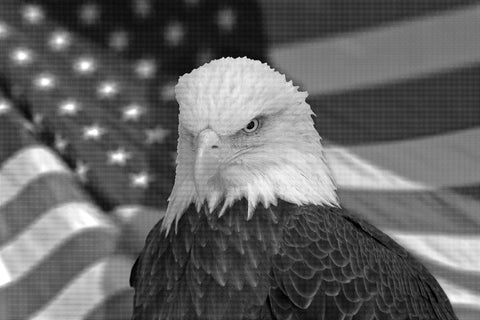 Serious bald eagle with american flag out of focus - Airbrush stencil