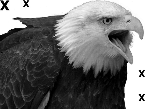 Isolated serious bald eagle- symbol of stregnth and indepence - Airbrush  stencil