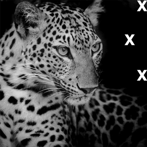 White leopard on black background - HD Airbrush stencil - High Detail stencil