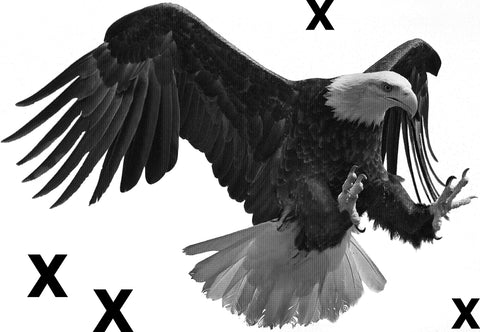 High Detail Airbrush stencil HD stencils Bald eagle in flight  - Predator bird-