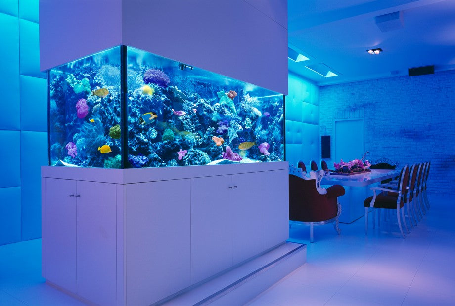 Roles that aquarists play in the success of their aquariums
