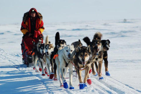 Iditarod - the Last Great Race, Alaska