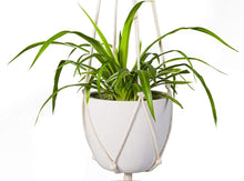 Load image into Gallery viewer, Indoor Wall Hanging Planter Basket