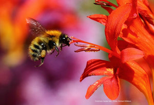 Lets Bee Serious: How iBeani Is Helping To Save The Bees