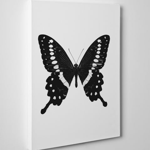 Gorgeous poster print with a black and white butterfly on white background - side view