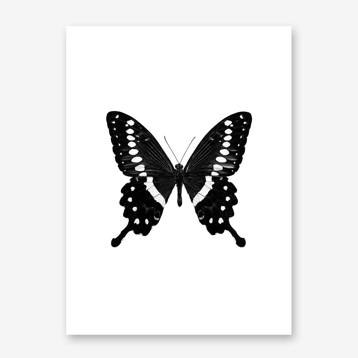 Gorgeous poster print with a black and white butterfly on white background.