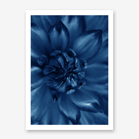 Botanical poster print, with a blue flower close-up